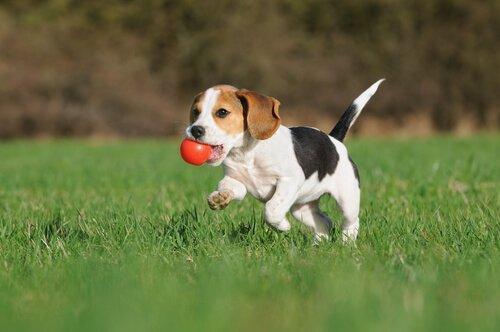 Cane: il gioco lo fa stare bene!