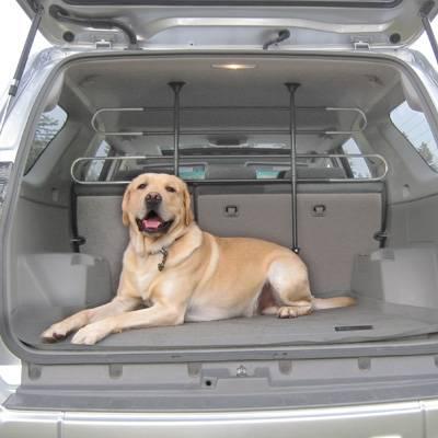 Porti il cane in macchina? Ecco cosa dice la Legge...