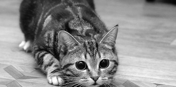 Le sette vite e i cinque sensi del gatto!