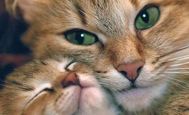 Gatti: mamme e cuccioli...