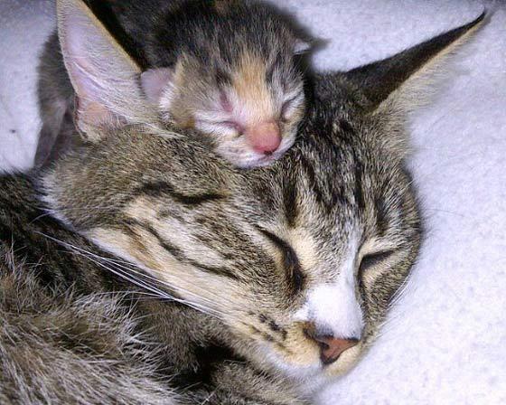"""Anche noi cuccioli vogliamo augurare una """"Buona Festa della Mamma""""..."""