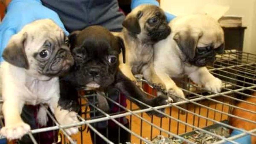Salvi ventisei cuccioli (merito della polizia stradale)!