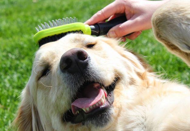 Quando avviene la muta del pelo in cani e gatti e che cosa è opportuno fare per aiutarli?