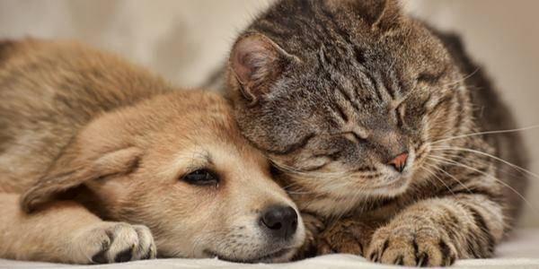 Il cane è più intelligente del gatto? Neanche la scienza lo sa...