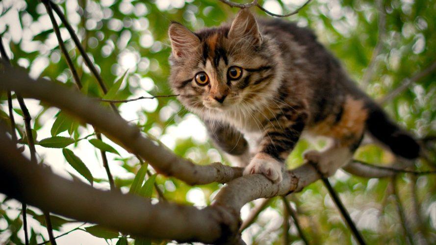 Gatto, un tipo inconfondibile!