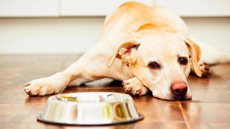 Intestino del tuo cane in disordine? Prova con i probiotici...