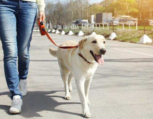 Cani in città: le regole d'ingaggio (i consigli dell'etologo Roberto Marchesini)!