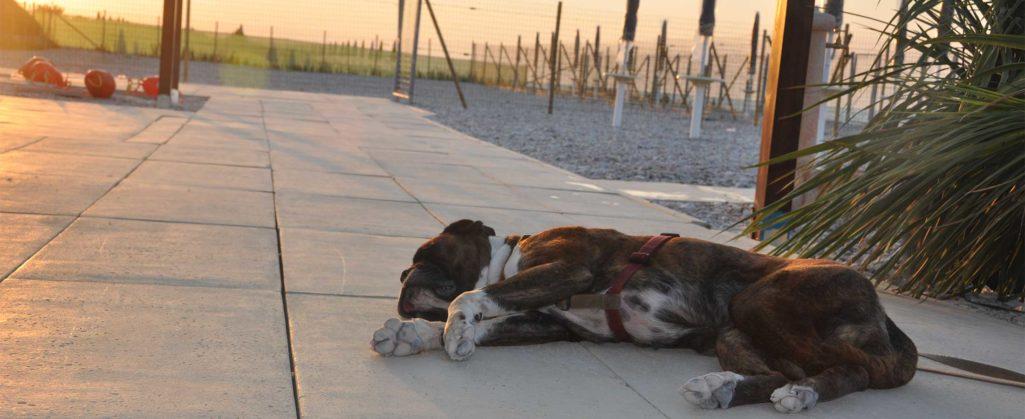 Vacanze con il tuo cane? La Baia Canaria a Senigallia (Ancona)!