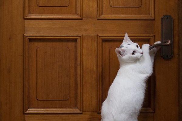 Gatto: intelligente e curioso (psicologia felina)!