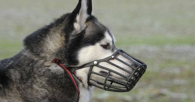 """Museruola ai cani """"pericolosi"""" (modificata l'ordinanza)..."""