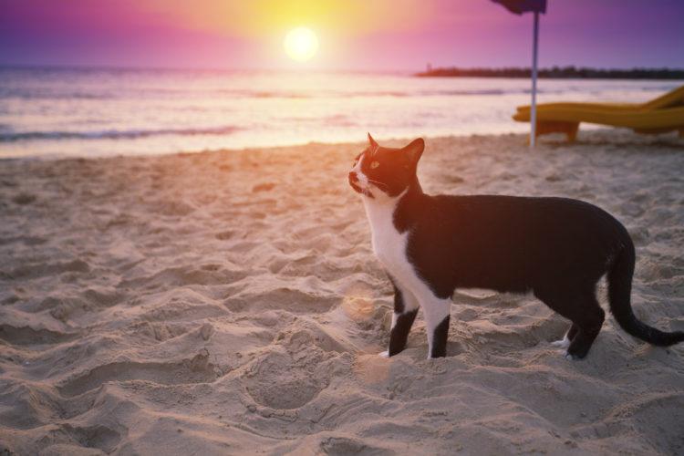 Ma il gatto ama la spiaggia?