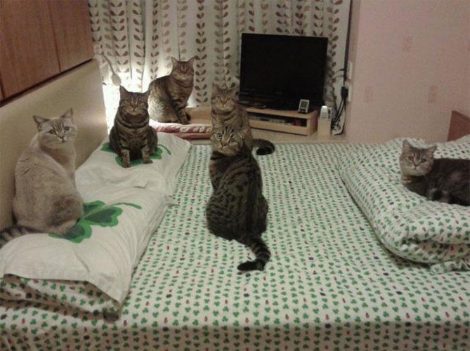Gatti: abitudini e rituali dei nostri amici a 4 zampe!