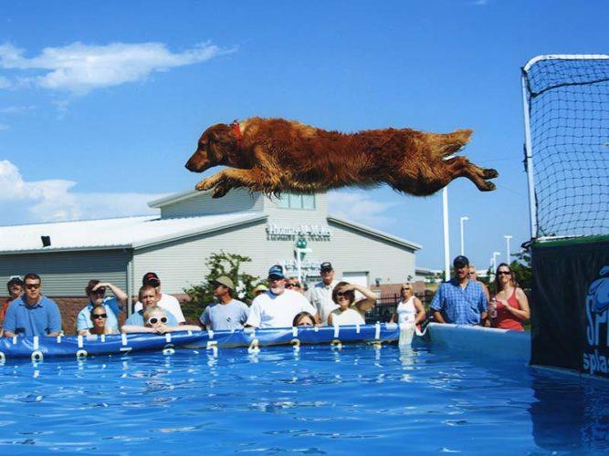 Splash dog: uno sport che piace tanto!