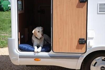 In viaggio: le regole per cani e gatti in camper!