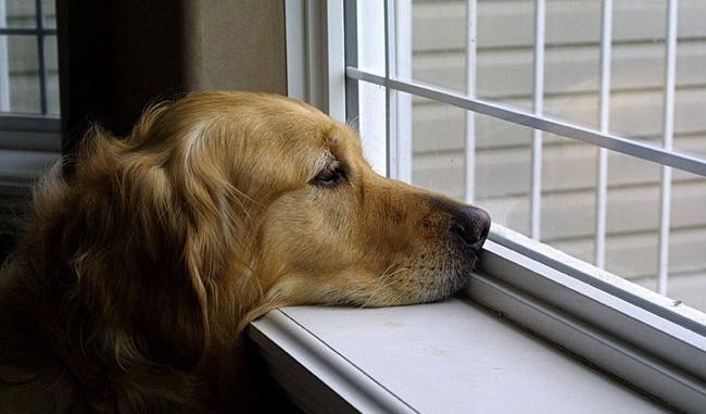Vorrei qualche consiglio su come comportarmi con il mio cane dopo il rientro dalle vacanze (risponde la dottoressa Michela Pettorali)...