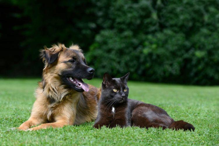 Intestino in disordine? Probiotici per cani e gatti (parte B)...