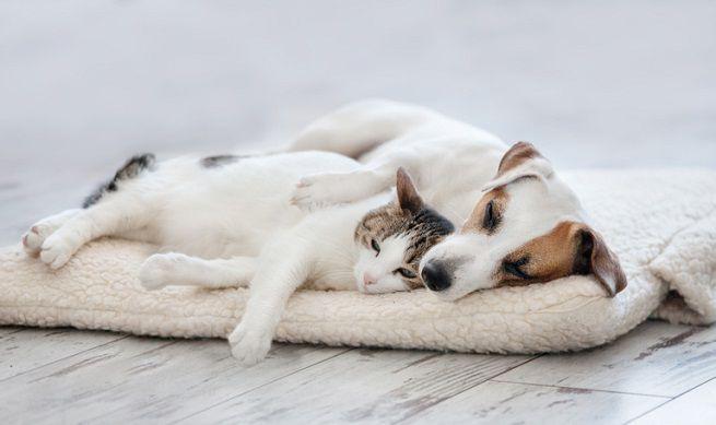 Intestino in disordine? Probiotici per cani e gatti (parte A)...