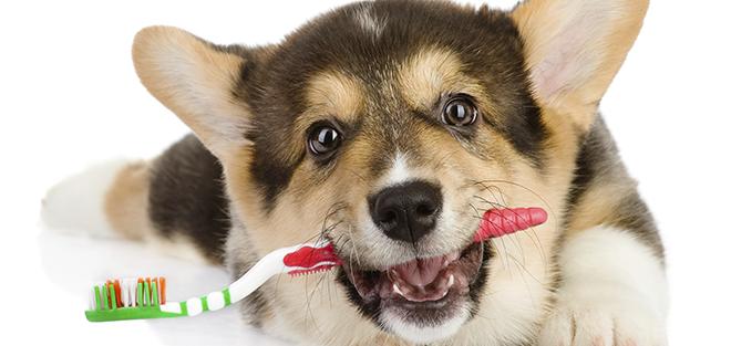 Il consiglio dell'esperto: il benessere del cane dipende anche dai denti!