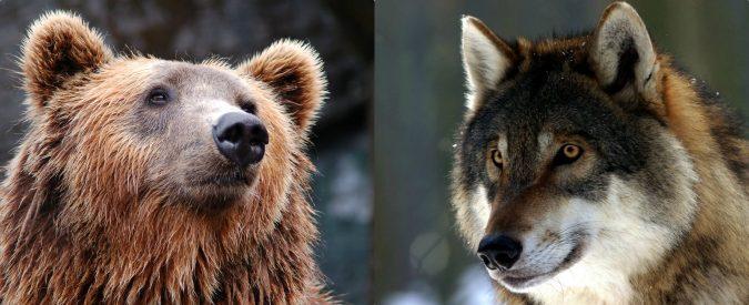Lupi e orsi: due ministri in loro difesa!