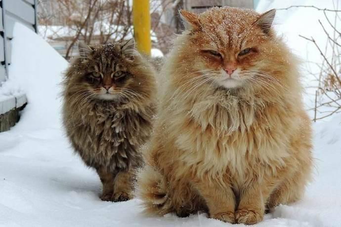Gatti: una vera e propria società felina!