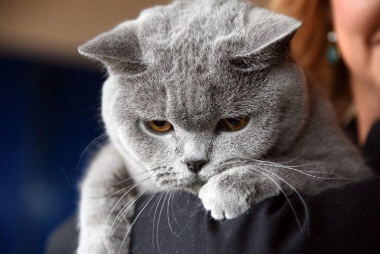 I gatti nascondono il dolore (come scoprire eventuali malattie)!