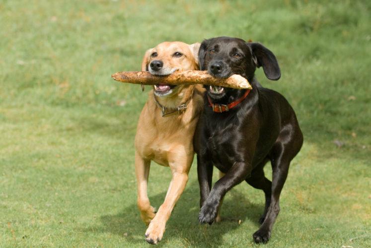 I cani imitano gli amici!