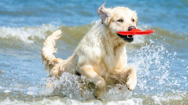 Aiuto: il mio cane beve l'acqua di mare!