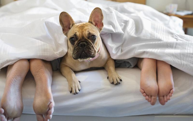 Il cane dorme sul mio letto, è pericoloso? Risponde il veterinario Andrea Iacchetti...