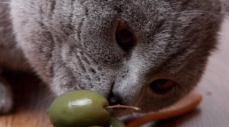 """Gatti """"drogati"""" di olive? Scopri il perché..."""