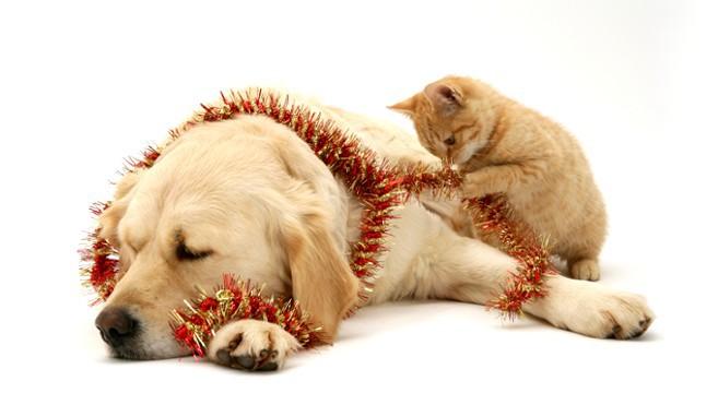 Auguri di Buon Natale ai nostri padroni.....