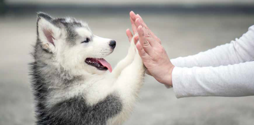 I cani e la comprensione dei gesti...