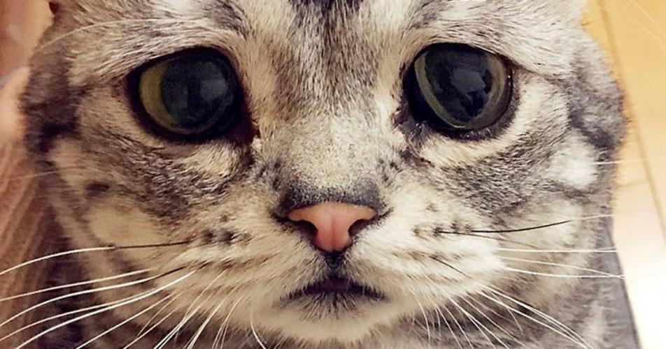 La gattina con problemi agli occhi...