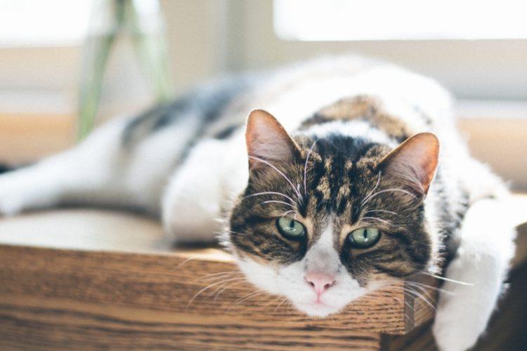Gatti anziani: quali proteine dare al nostro micio che invecchia!