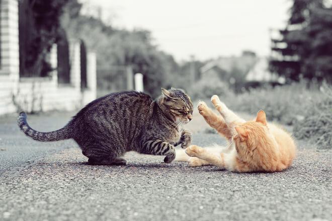 Gatto: la difesa del territorio a oltranza!