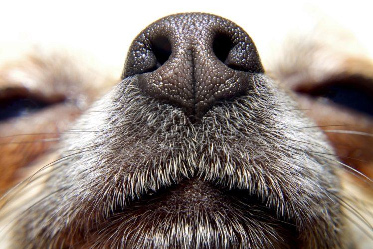Preferenze alimentari del cane: servono olfatto, gusto e tatto!