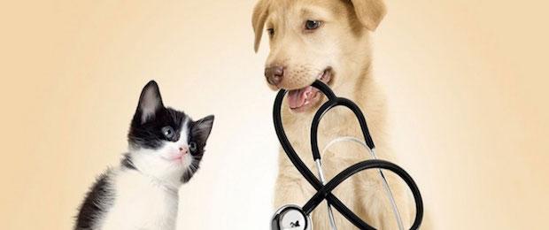 Prestazioni veterinarie e cibo per animali: seguiamo la Spagna e abbassiamo l'IVA!
