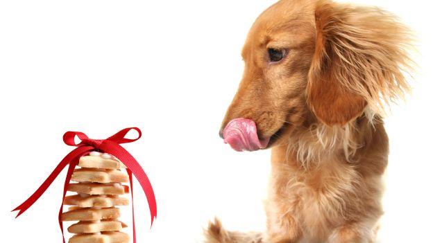 Biscotti impronta (per cani)...
