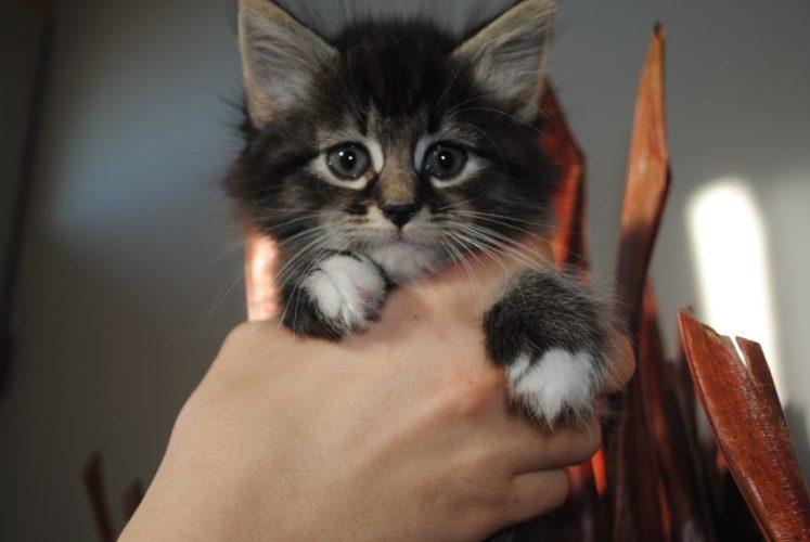 Salute del gatto: la prima visita dal veterinario!