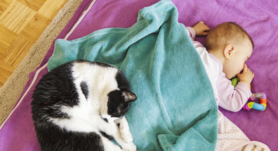 Il sonno del bebè è migliore se dorme con il gatto...