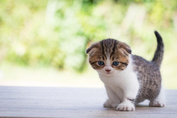 Il consiglio dell'esperto: il decalogo per l'arrivo di un gattino!