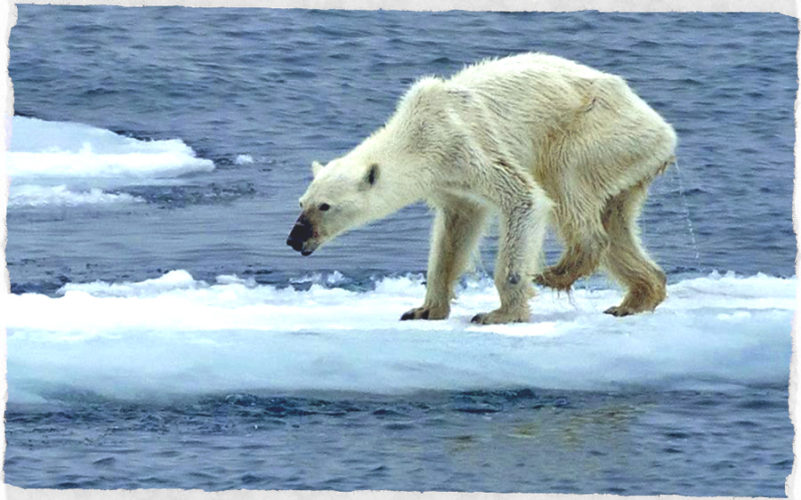 Allarme: biodiversità in declino! Il report 2018 del WWF...