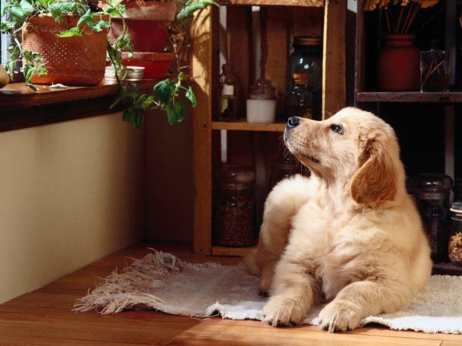 Il galateo del cane in casa per non disturbare i vicini...