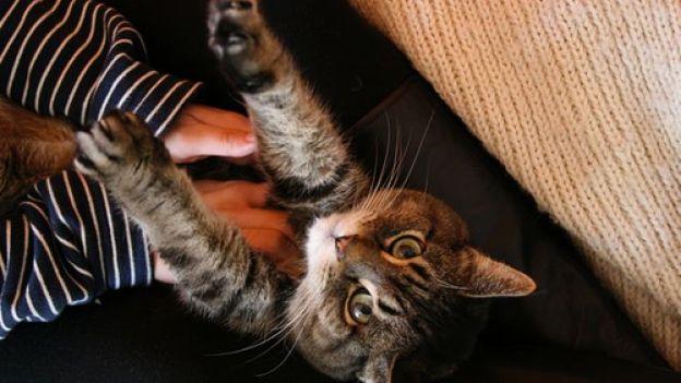 Gatto: come massaggiare il nostro micio!