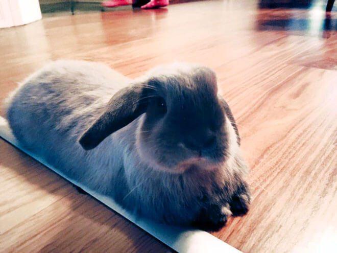 Vorrei adottare un coniglio. Quali consigli può darmi?