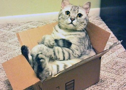 Gatti: i luoghi della nanna!