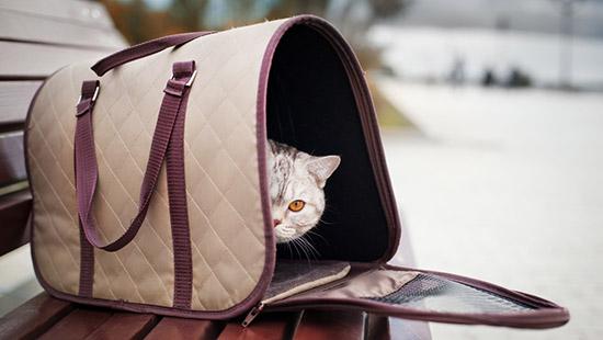 I trucchi per portare il micio dal veterinario...