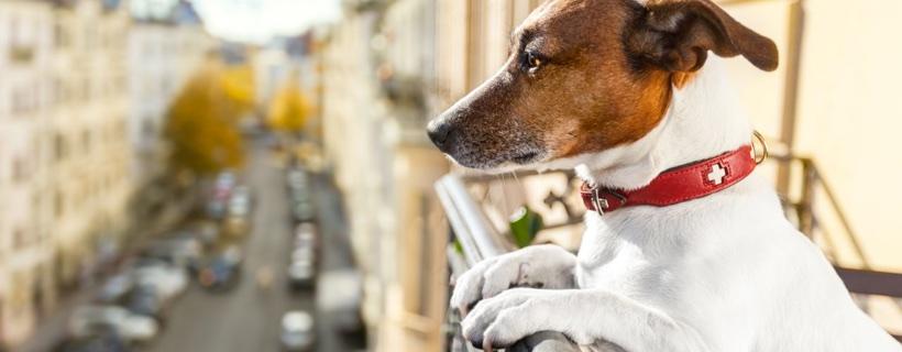 Rivolta d'Adda: un paese a misura di animali!