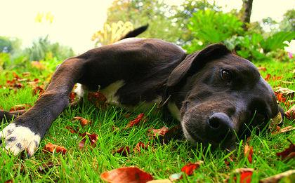 È giusto far vivere il cane in giardino? Un articolo dell'etologo Roberto Marchesini...
