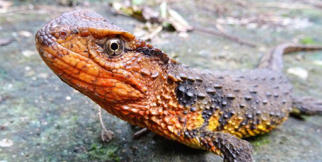115 nuove specie scoperte nella regione del Mekong, in Asia...