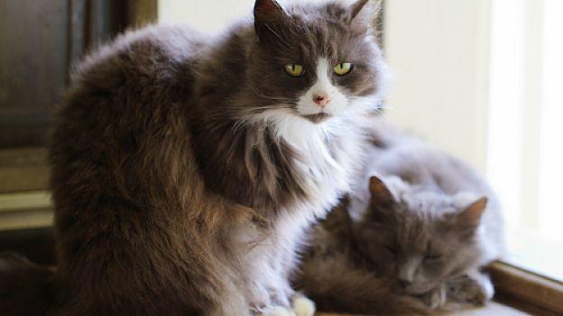 Al mio gatto anziano è stata diagnosticata la FUS. È un disturbo curabile? Risponde il veterinario Oscar Grazioli...